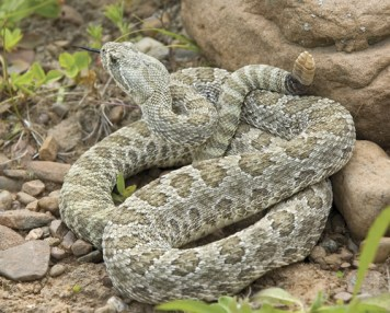 snakes during winter