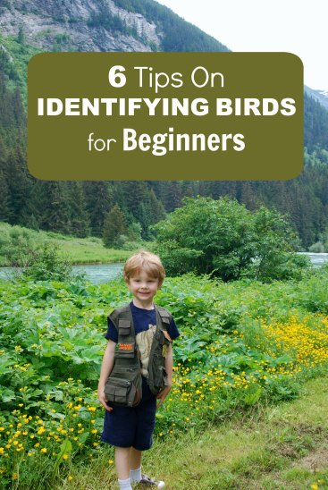 6 tips identifying birds
