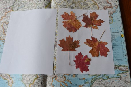 pressing flowers, leaves, fall activities