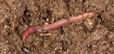 worm, animal