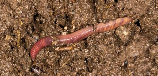 breathe, earthworm