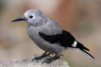 birds see