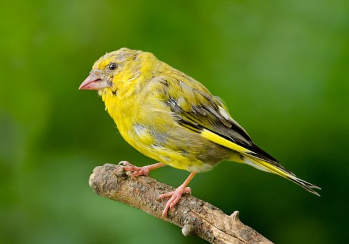 birds molt