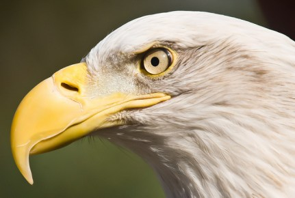 bird rub beak,