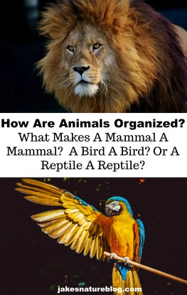 animals-pin about nature amphibians animals birds blog bugs characteristics classification fish insects jakes fun facts about nature mammals Nature reptiles