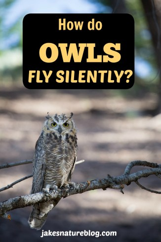 owls fly silently