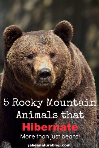 rocky mountain hibernators