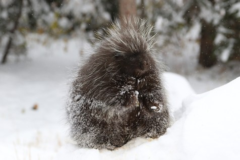 animals active during winter