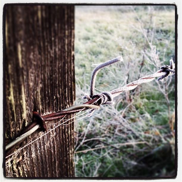 Frosty Barb Wire