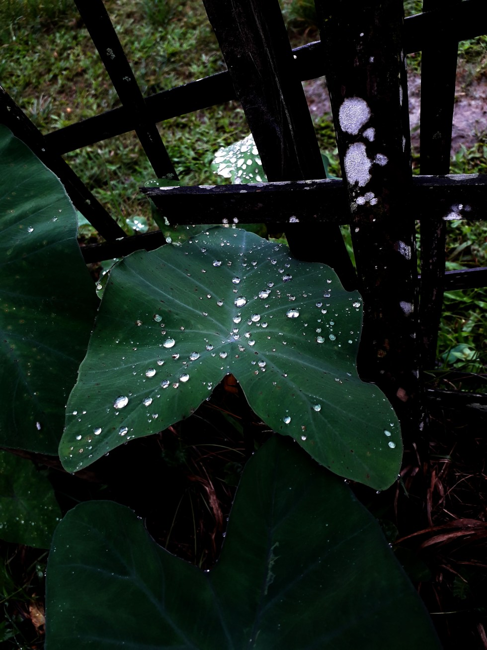 drops of rainwater on a leaf
