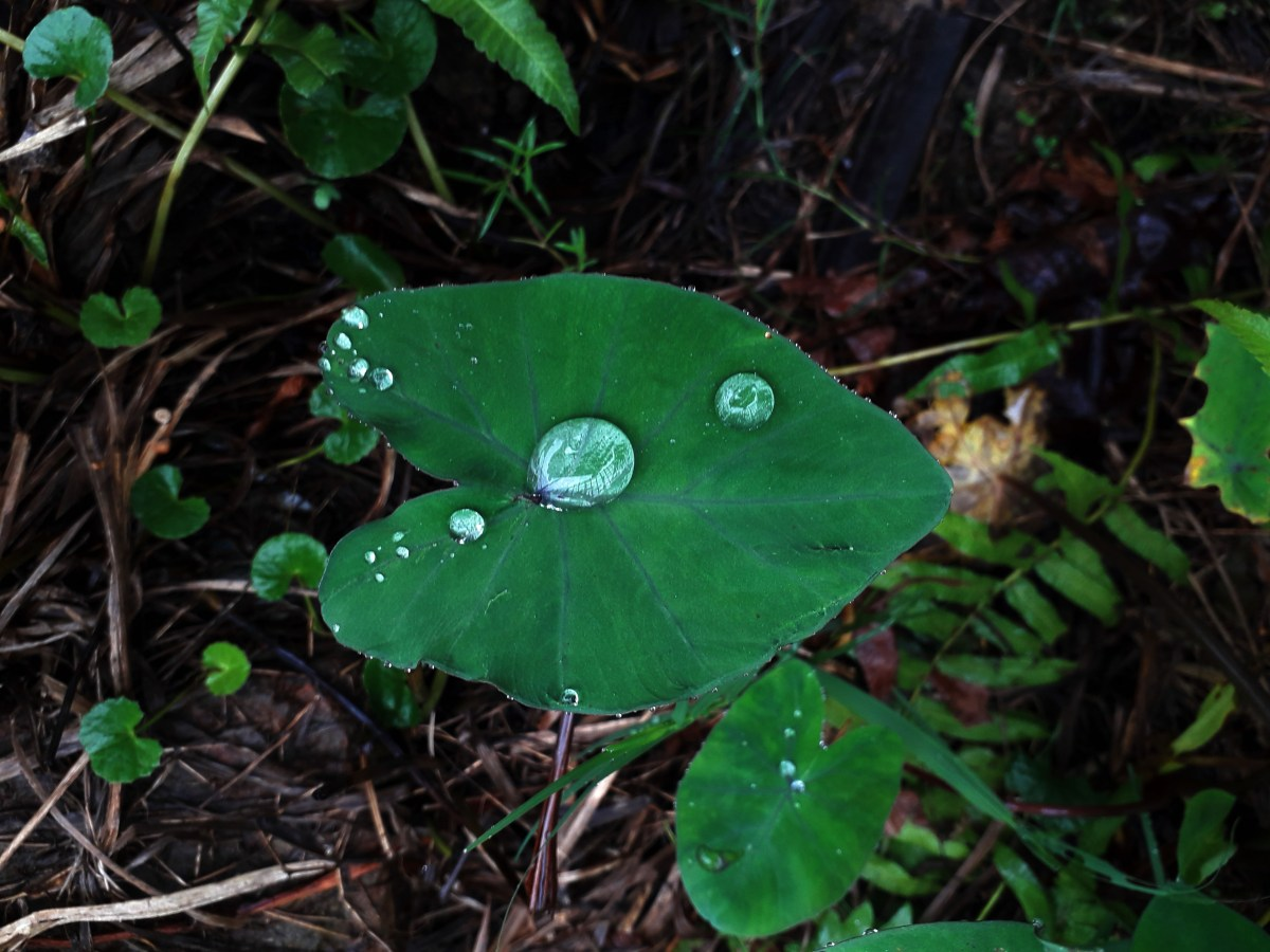 leaf with drops of rainwater