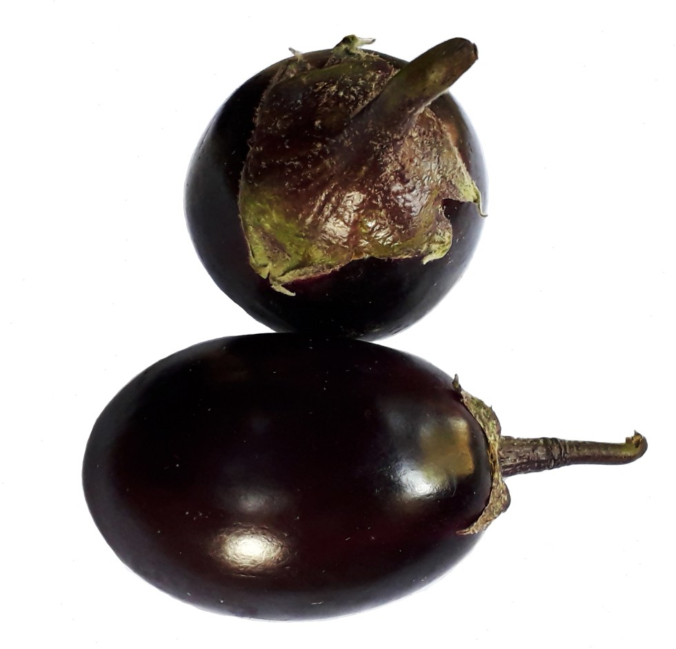 Two fresh round eggplants or brinjals
