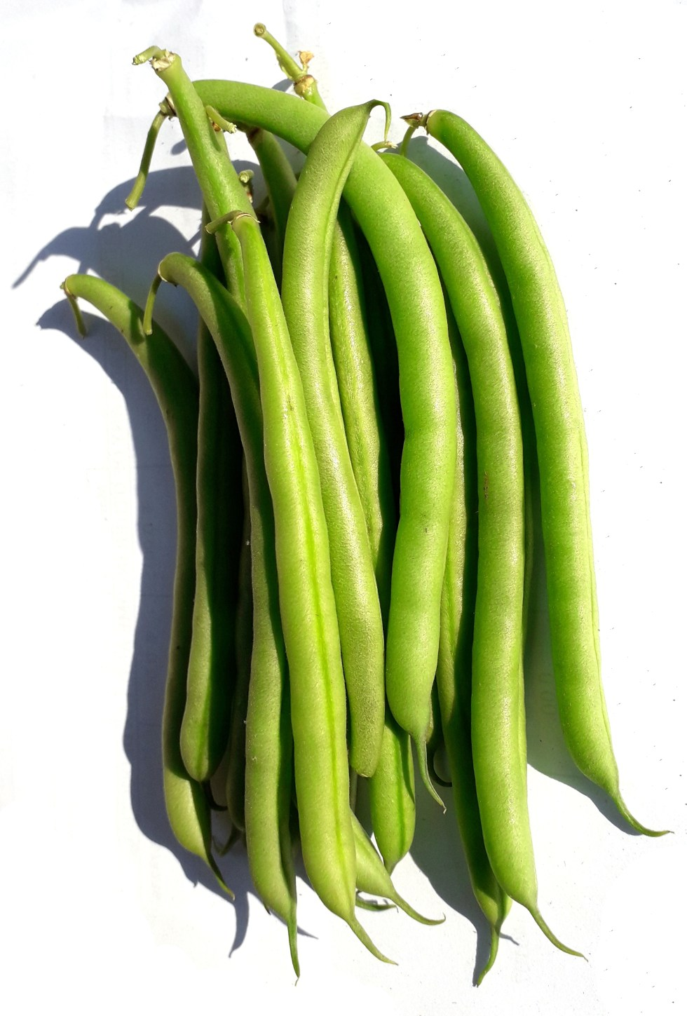 Some matured fresh green beans
