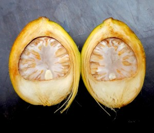 two halves of a betel nut with husk