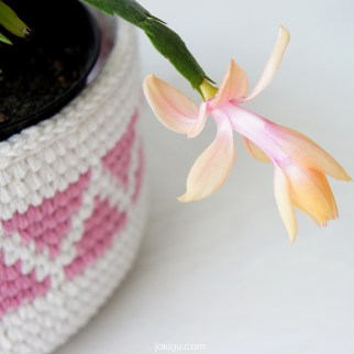 Pink and White Crochet Planter with Christmas Cactus