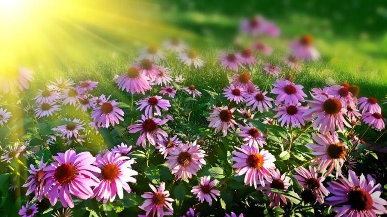 ROD ogródek działkowy- jak wybrać idealną działkę?