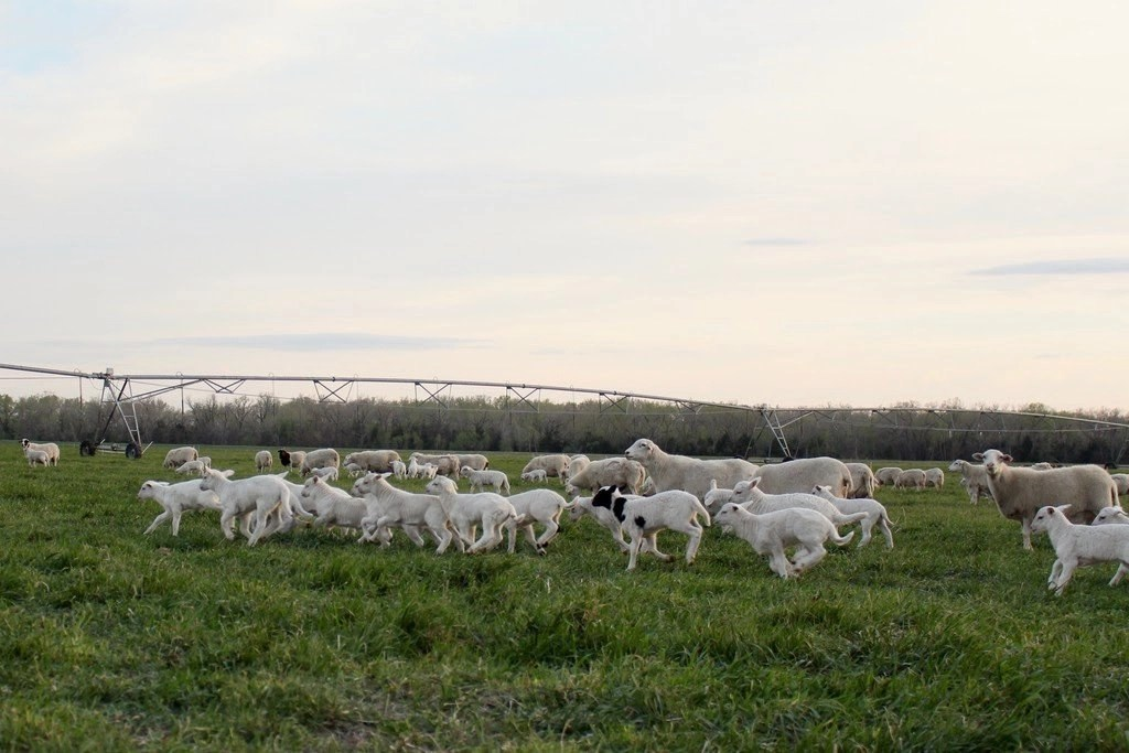 RSVP to An Evening on the Farm
