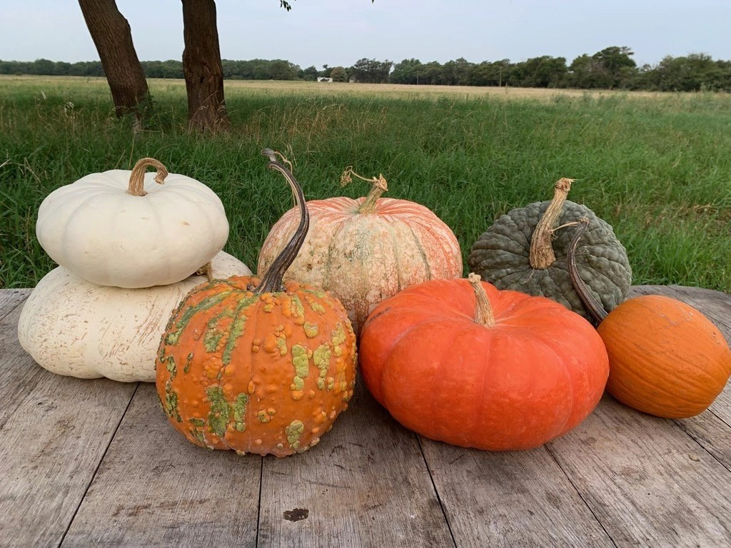 Read more about the article Fall Pumpkins and Squash are Here!