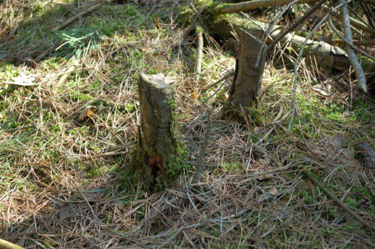 drewno na rozpałkę