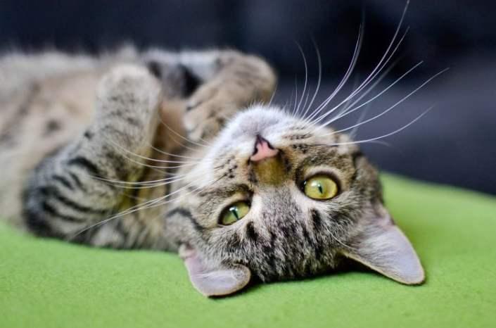 Jak pokonać lenistwo? 9 sposobów!
