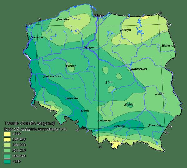 Okresy wegetacji w Polsce | Jak zbierać sok z brzozy