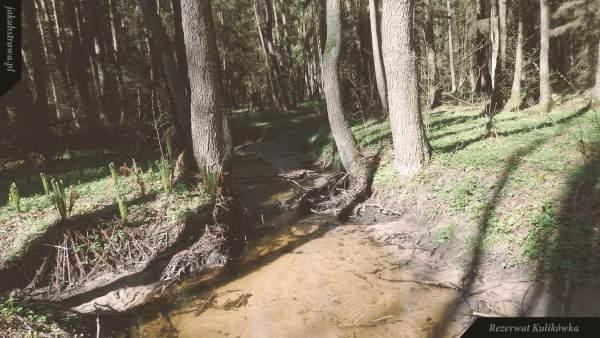 Łęg gwiazdnicowo-olszowy - rezerwat Kulikówka