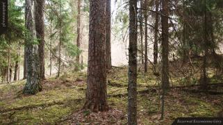 Kamieniste stoki Krzemiennych Gór | Rezerwat Krzemienne Góry