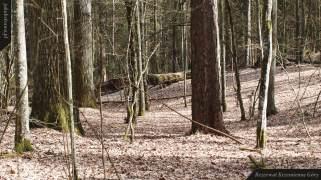 Powalone drzewa | Rezerwat Krzemienne Góry