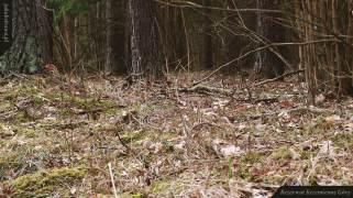 Polana z przylaszczkami | Rezerwat Krzemienne Góry