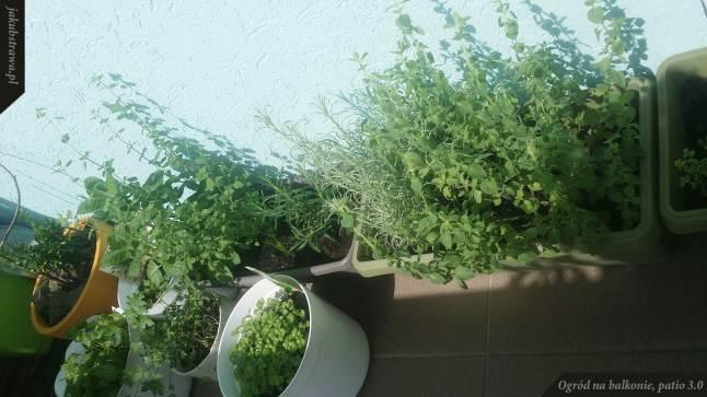 Zioła | Ogród na balkonie