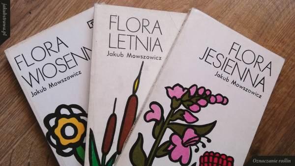 Flora wiosenna, letnia i jesienna Mowszowicza | jakubstrawa.pl