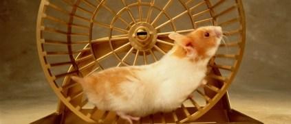hamster-nedir