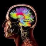 Cómo la transformación digital cambia nuestro cerebro y nuestra mente