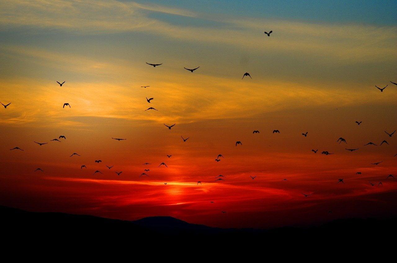 sunset, birds, flying