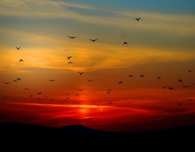 sunset, birds, flying