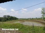 Saung Liwet Kang Nana (5)