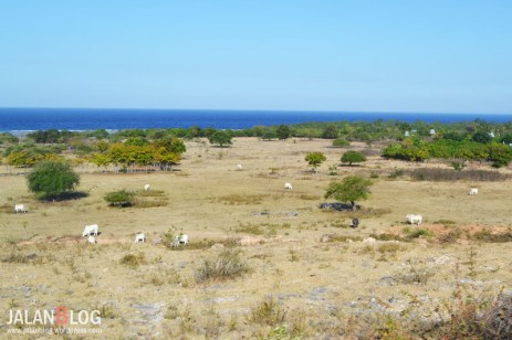 Laut dan Sabana