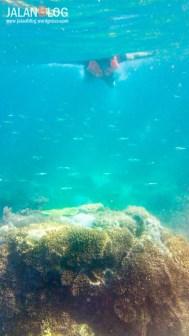 Underwater Pink Beach