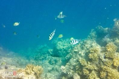 Pulau Bidadari Underwater