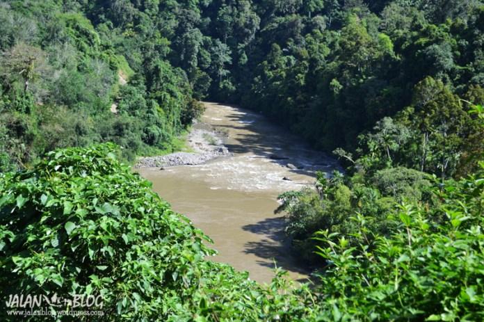 Hutan lebat dengan sungai di bawahnya...