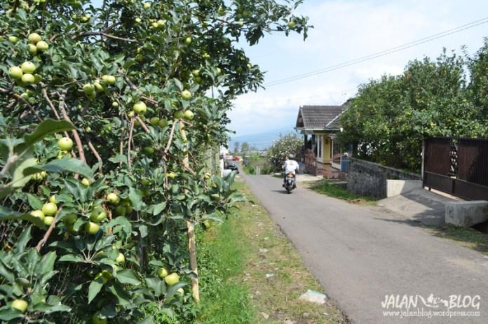 Apel di pinggir jalan