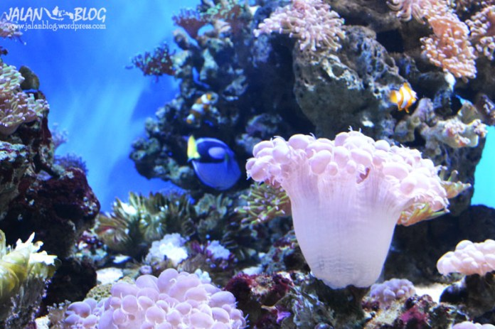 Nemo, Bapaknya Nemo dan Dory....