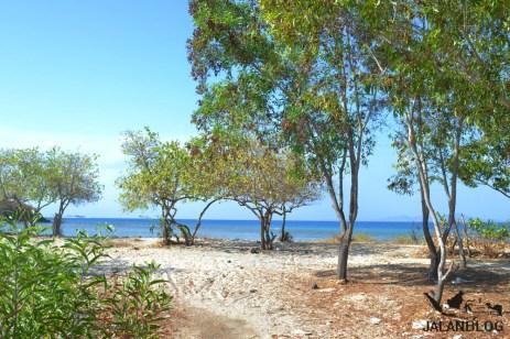 Pepohonan di tepi pantai
