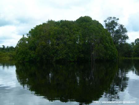 Danau Tahai & Orang Utan, PalangkaRaya, Kalteng (2/5)
