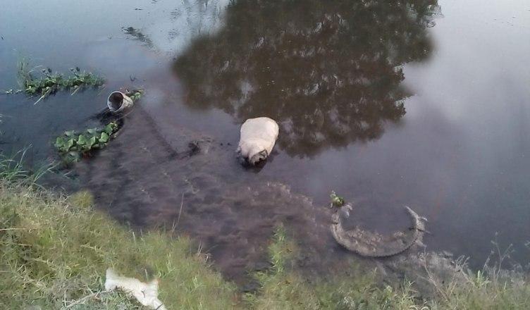 5a01afb42 Localizan cerca de 19 cuerpos al interior de bolsas negras tiradas al  interior de un canal pluvial que se encuentra a un costado de la Carretera  que conduce ...