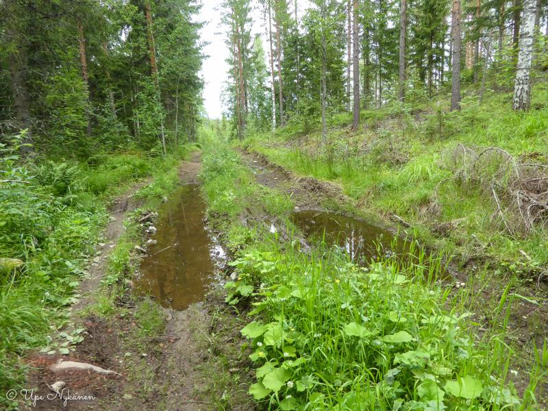 Märkä reitti metsän poikki Hyvinkäällä.