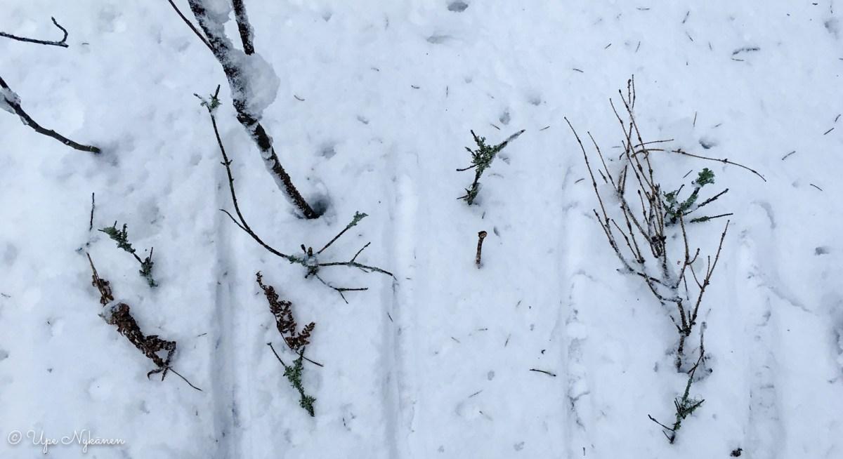 Mistä luovun: symboliset risut lumihangella.