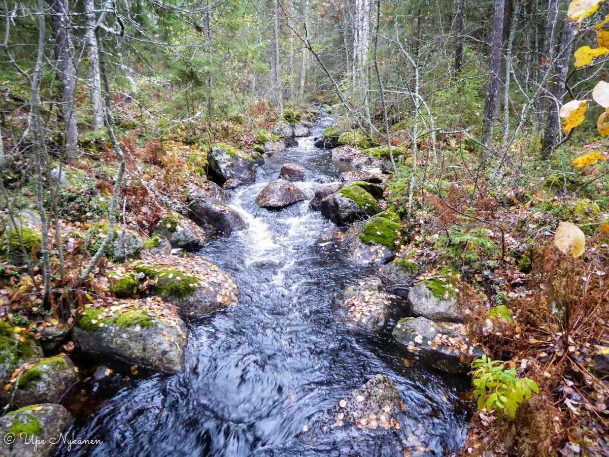 Vuosjoki virtaa kapeana metsän keskellä, Saarijärvi.