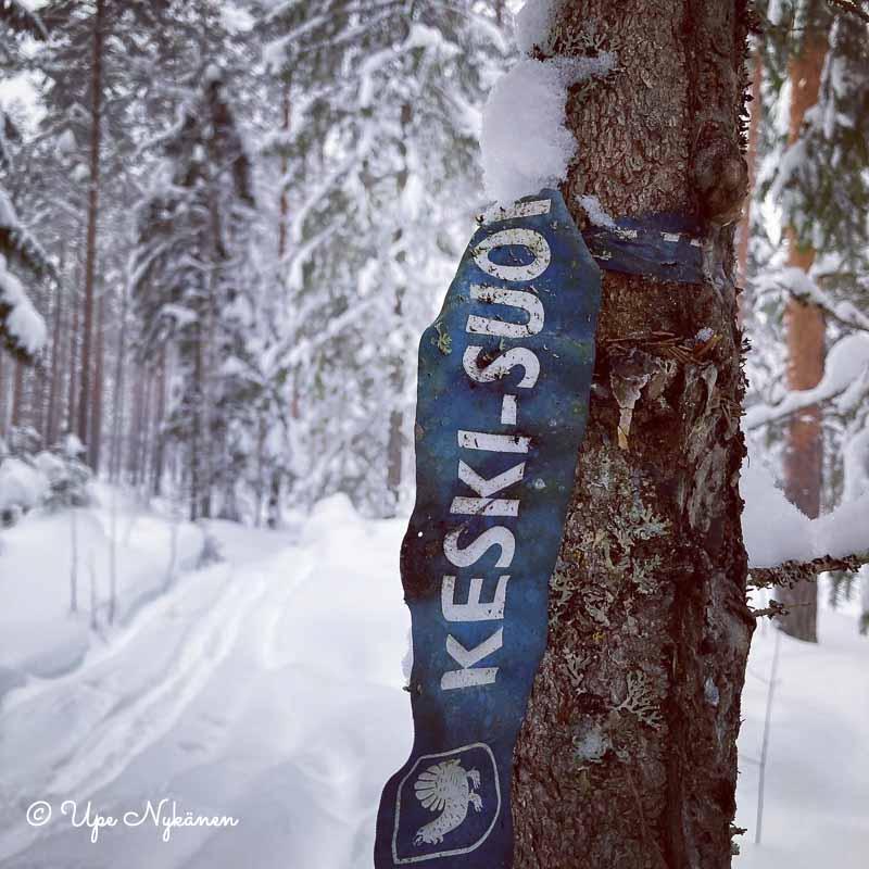 Keski-Suomen maakuntauran sininen nauha solmittuna puun ympäri ladun vieressä.