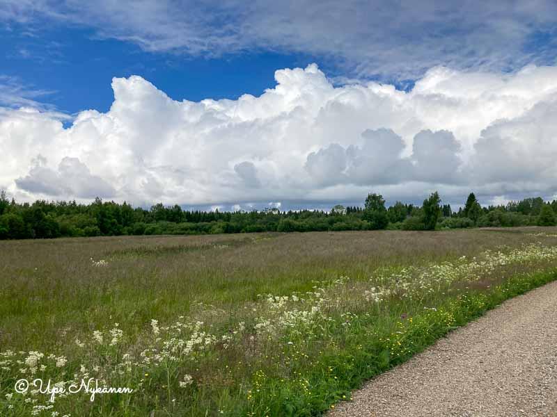 Hiekkatien vieressä kesäinen niitty, yllä komeat valkoiset kumpupilvet ja sininen taivas.